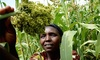 IBM supports African agricultural start-ups