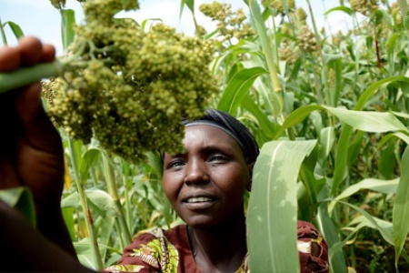 Africa's first online platform for female agripreneurs launched