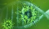 Coronavirus forcing businesses to go digital, fast