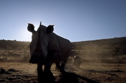 Dimension Data, Cisco to protect rhino by tracking people