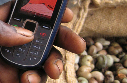 The African Cashew Initiative is driving ICT use in cashew farming